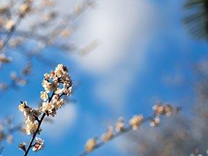 春天的養生