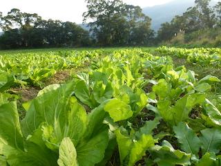 武漢肺炎~植物性飲食,吃出健康防護力