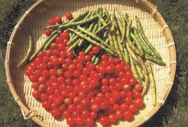 記憶中番茄醬的青澀歲月