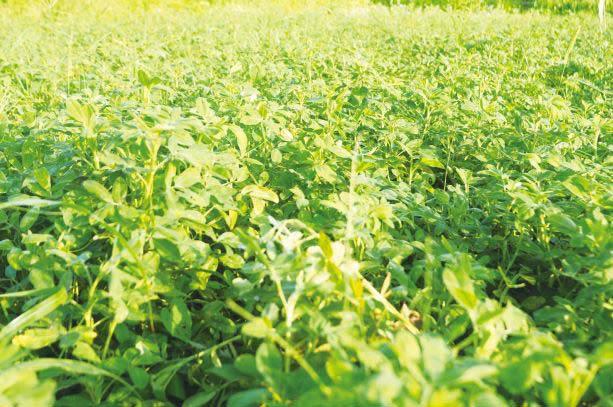 厚厚青草為大地保溫