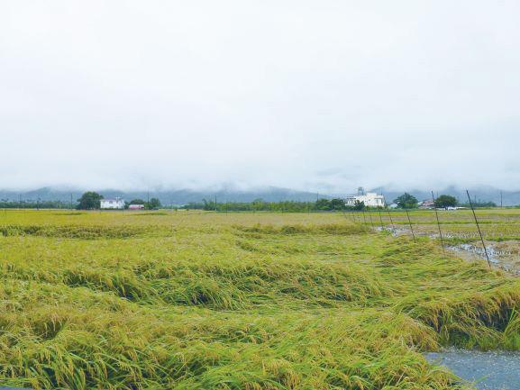 近代稻米現象應有的省思