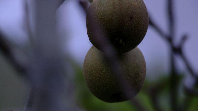 水果,應該越大越好?